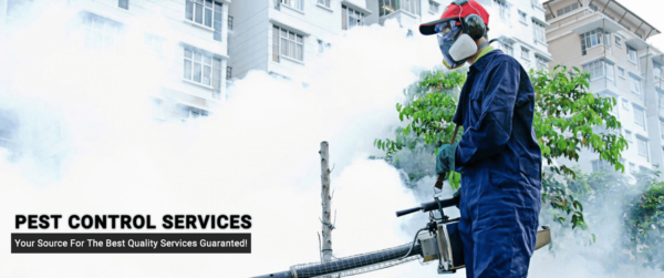 Factors to Consider For Choosing the Best Pest Control Company